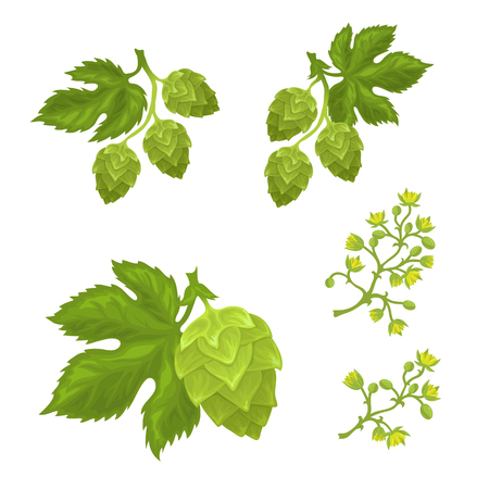 Hops cones and flowers with leaves, fully hand drawn vector