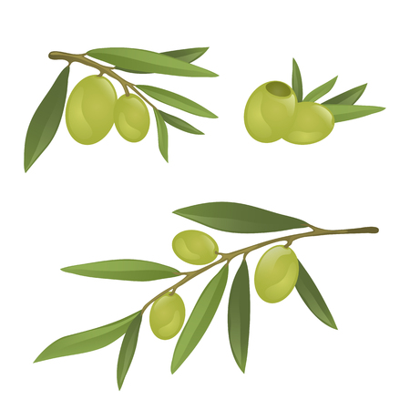 Olive branches with green olives, fully hand drawn vector