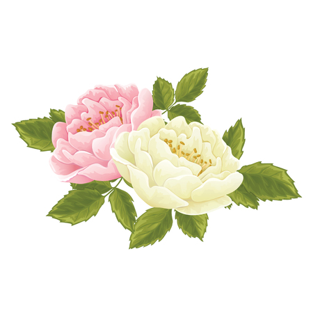English rose graphic flowers, set in different color. For wedding invitation or greeting card. David Austin rose