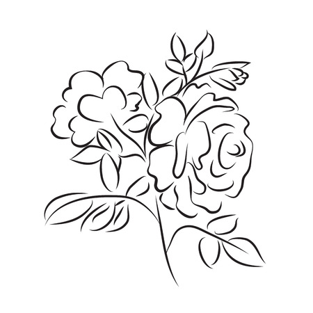 Sketch rose branch, hand drawn, very simple outline with little details