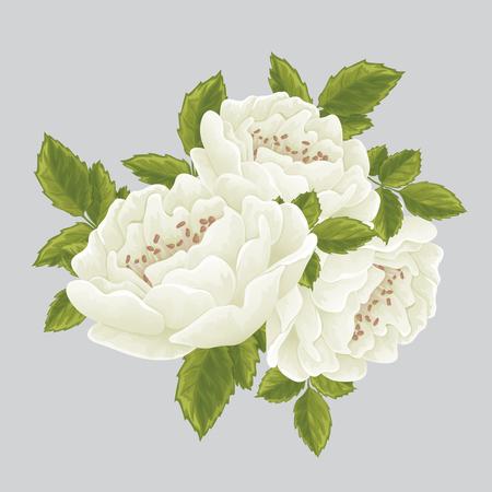 English white rose graphic flowers. For wedding invitation or greeting card. David Austin rose Illustration