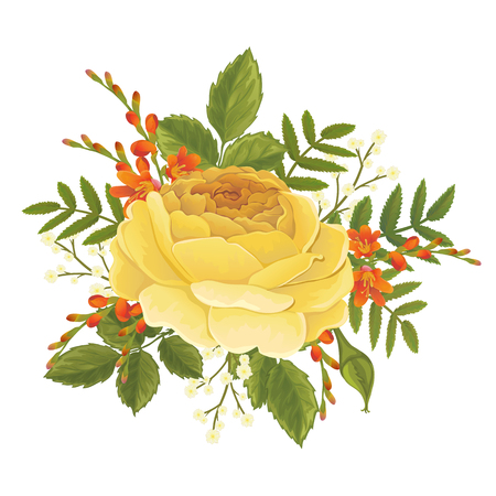 English orange rose and crocosmia graphic flowers. For decorating wedding invitation or greeting card. David Austin rose - Golden Celebration