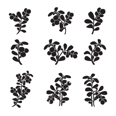 Vaccinium vitis-idaea ( lingonberry or cowberry) silhouette branches. Illustration