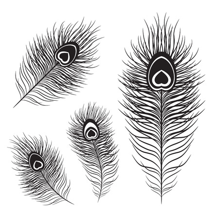 Peacock feather set in different shapes