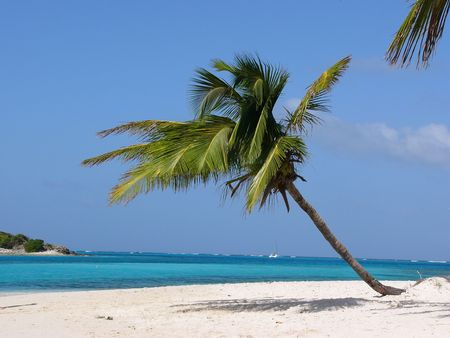 carribean: Palm on the tropical beach