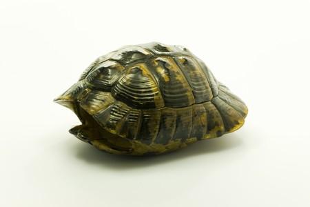 Turtle Shell isol� sur blanc