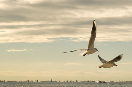 Seagulls between the clouds Stock Photo