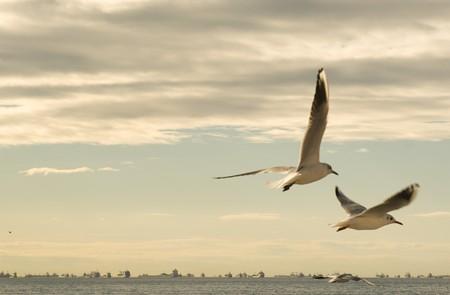 Seagulls between the clouds Stok Fotoğraf