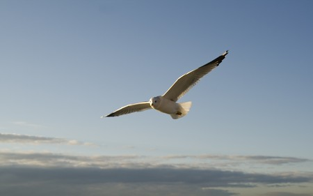 Seagull on the bright blue sky
