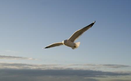 Seagull sur le bleu du ciel