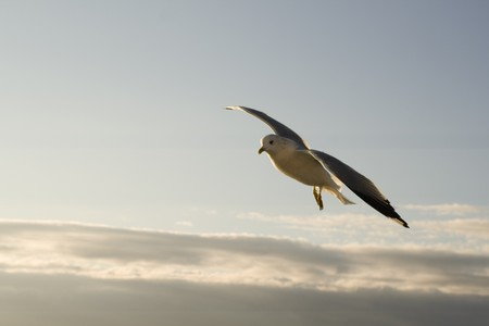 Seagull on the bright sky Stock Photo