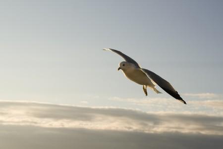 Seagull on the bright sky Stok Fotoğraf