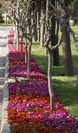 Road side full of beautiful flowers Stok Fotoğraf