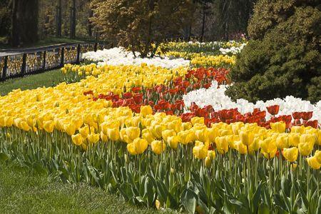 Jardin de printemps avec des fleurs color�es