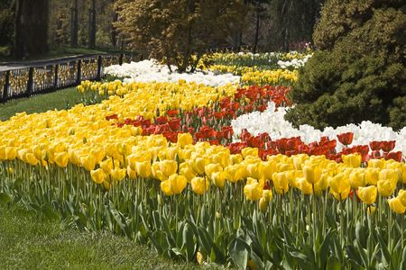 Spring garden with colorful flowers Stock Photo