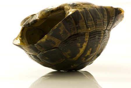 Turned down empty shell of turtle