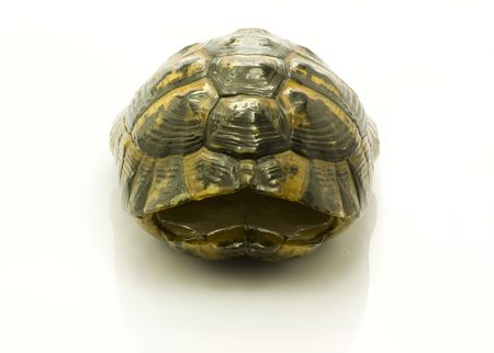 Straight angle shot of turtle shell