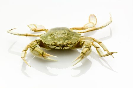 Dead crab isolated on white background