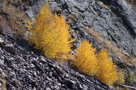 Trees On A Scree Slope In The Fall Stok Fotoğraf