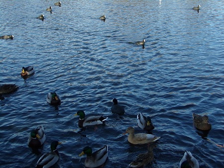 Wonderful Water Birds, Image 1, by Wesley Southall.  Taken on location in Nuneaton, England