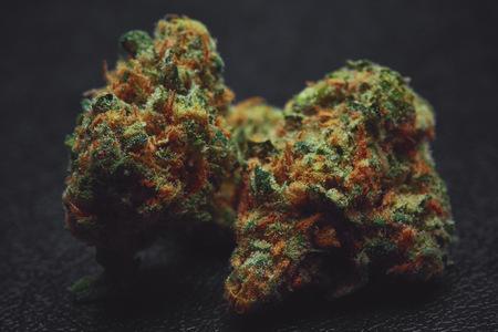 Sativa marijuana bud