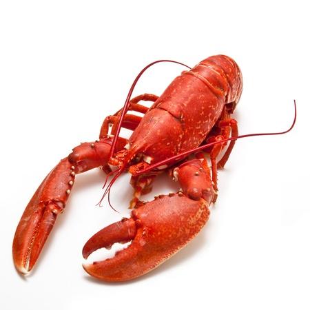 lobster: 요리 랍스터