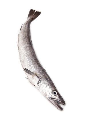 European Hake fish isolated on a white studio background. Stock Photo