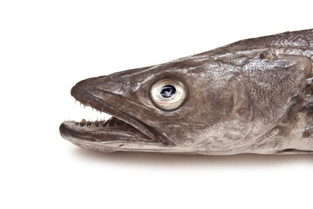 hake: European Hake fish isolated on a white studio background. Stock Photo