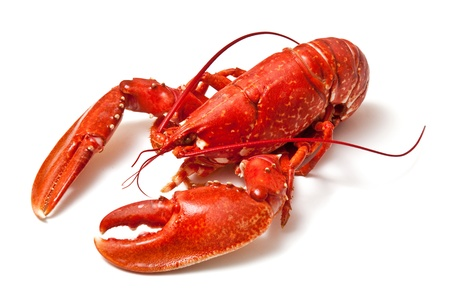 lobster isolated: Cooked lobster on a white studio background  Stock Photo