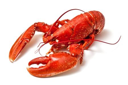 owoce morza: Gotowane homara na białym tle studio Zdjęcie Seryjne