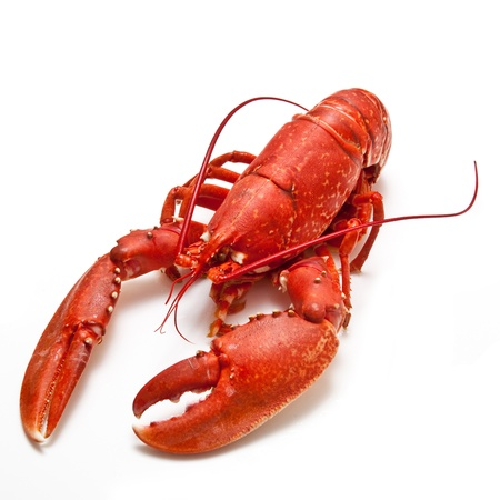 Cooked lobster on a white studio background  Stock Photo