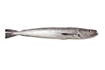 Hake fish ioslated on a white background