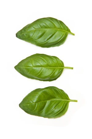Fresh Basil leaves isolated on a white studio background. photo