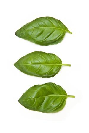 Fresh Basil leaves isolated on a white studio background. Stock Photo