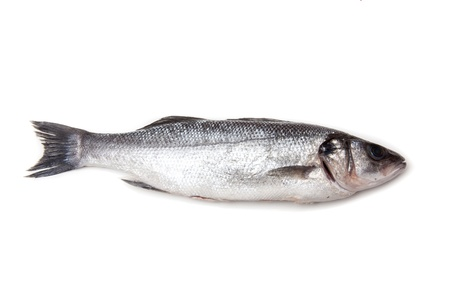 Sea bass fish isolated on a white studio background. photo