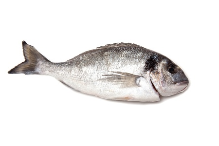 Sea Bream or Dorado fish isolated on a white studio background. Stock Photo - 17707916
