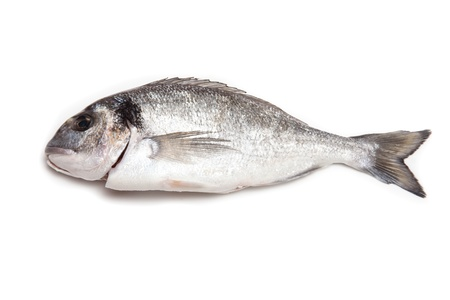 Sea Bream or Dorado fish isolated on a white studio background. photo