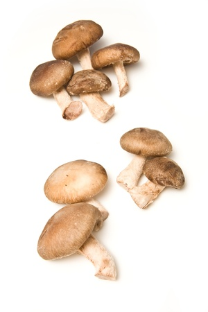 shitake: Shitake mushrooms isolated on a white studio background. Stock Photo
