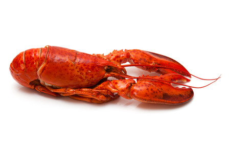 Cooked Canadian red lobster isolated on a white studio . Stock Photo