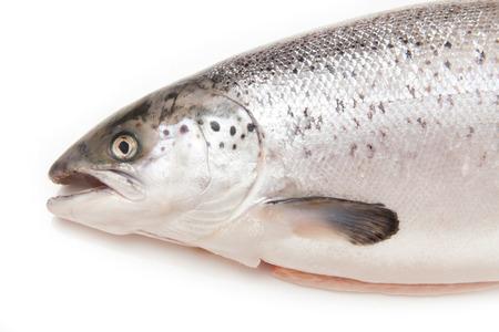 Whole Scottish Atlantic Salmon Salmo salar(3.1kg). Isolated on a white studio background.