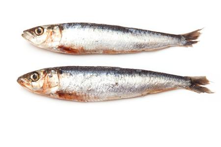 sardinas: Sardinas de Cornualles aislados en un fondo blanco de estudio.