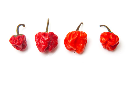 Scotch bonnet chili peppers or Caribbean peppers isolated on a white studio background. Stock Photo
