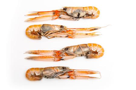 Langoustine  (Nephrops norvegicus),Dublin Bay Prawn or Norway Lobster ioslated on a white studio background. photo