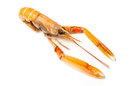 Langoustine  (Nephrops norvegicus),Dublin Bay Prawn or Norway Lobster ioslated on a white studio background. Stock Photo
