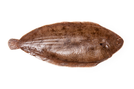 salt water fish: Dover sole (Solea solea) fish whole isolated on a white studio background.