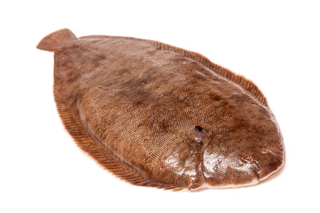 Dover sole (Solea solea) fish whole isolated on a white studio background.