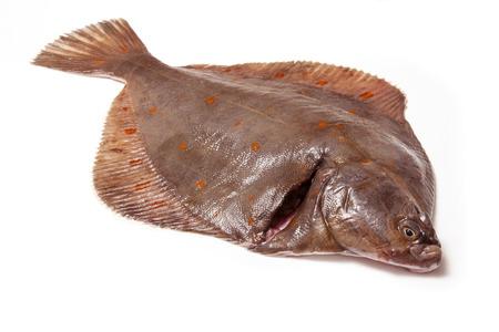 Whole Plaice flatfish isolated on a white studio background.