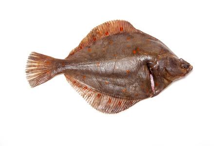 Entières plie poissons plats isolés sur un fond blanc studio. Banque d'images