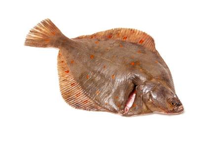 plaice: Whole Plaice flatfish isolated on a white studio background.
