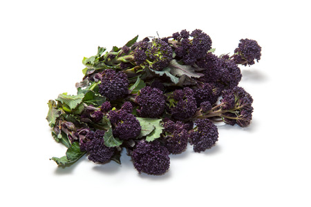 sprouting: Purple sprouting broccoli isolated on a white studio background.